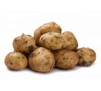 Картофель молодой кг.